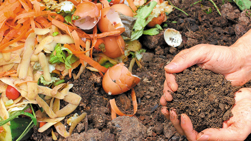 Kitchen Waste To Compost In One Easy Lesson